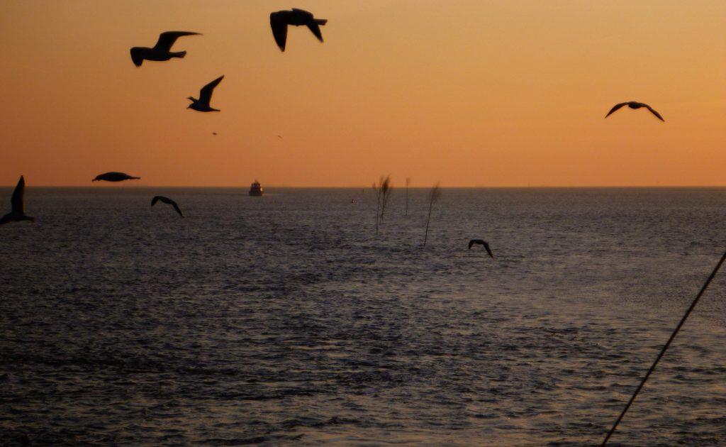 Pricken und Seevögel
